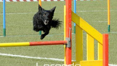 FOTO Prekrasni i inteligentni psi osvojili stadion Kantrida – Održano agility natjecanje @ Rijeka