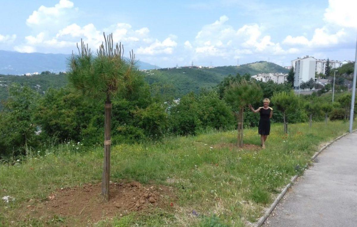 Poklonite stablo gradu – Udruga Zlatni ljudi već 12 godina kontinuirano donira drveće i obogaćuje zelene površine @ Rijeka