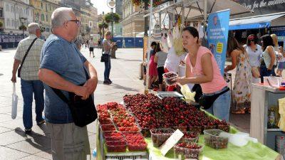 U OKU KAMERE Trešnje na Korzu kao najava sutrašnje gastromanifestacije povodom blagdana sv. Vida @ Rijeka
