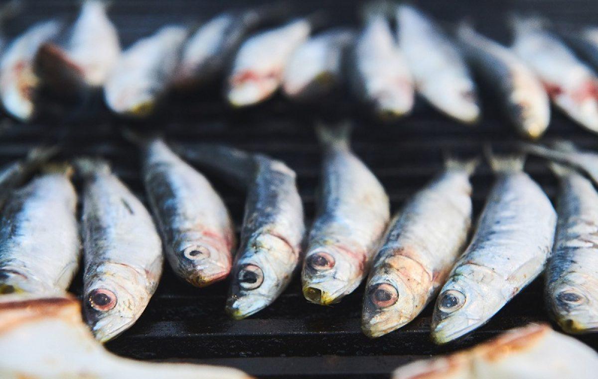 Gnam gnam fest – Sardelafest donosi ukusne i maštovite degustacijske zalogaje od srdele i druge plave ribe @ Novigrad