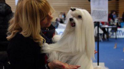 Preko 1700 pasa dolazi Centar Zamet – Predstavit će se na Međunarodnoj izložbi pasa CACIB 2019.