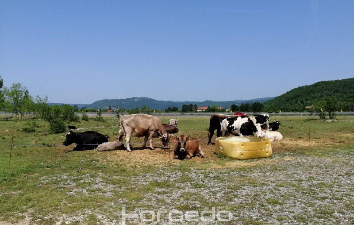 U OKU KAMERE Krave bez granica