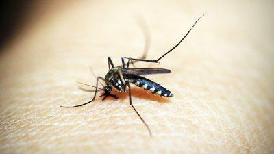 Obavijest o zaprašivanju protiv komaraca na području Općine Kostrena