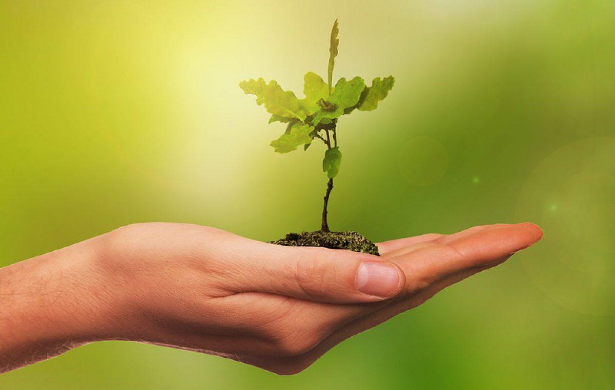 """Primorsko-goranska županija uključila se u akciju """"Zasadi drvo, ne budi panj"""""""