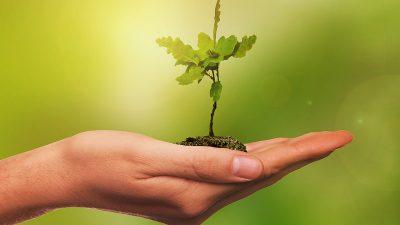 Zeleni val – Sadnjom voćki i aromatičnog bilja do ljepšeg i ugodnijeg platoa Robne kuće Gornja Vežica