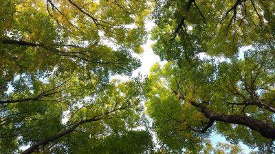Sutra se održava ekološka akcija čišćenja šetnice prema kanjonu Riječine – Koporovo