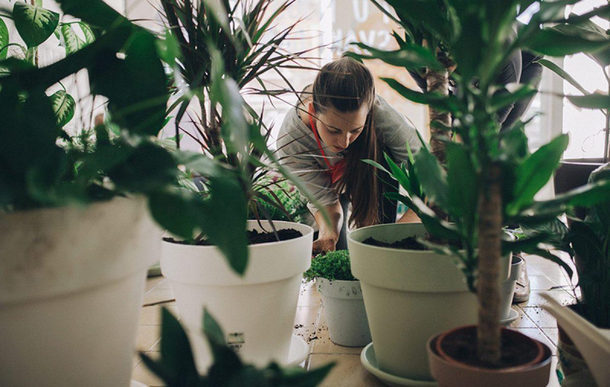 Svi su ludi za Biljkotekom – Prvi riječki hotel za biljke izazvao veliki interes građana