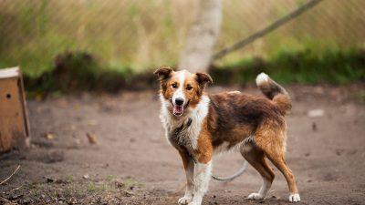 Ne zaboravimo na pse i mace potresom stradalog područja