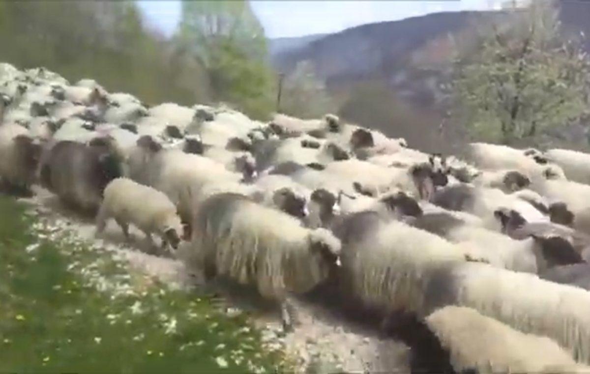 """VIDEO Officer Down obradili pjesmu """"Pijuni"""" neprežaljenog riječkog benda Pasi"""