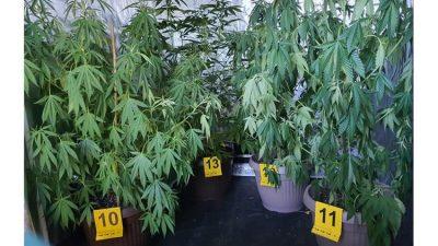 Opatijska policija otkrila pogon za uzgoj marihuane