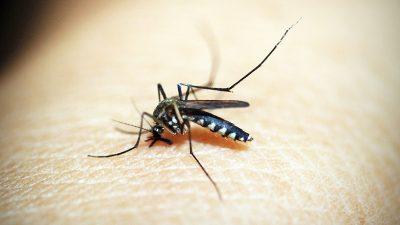 Zaprašivanje protiv komaraca sutra navečer na području Kostrene