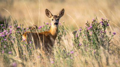 Kostrena krenula u izradu Programa zaštite divljači na površinama izvan lovišta