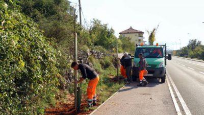 Održana akcija nastavka sadnje drvoreda na novoj cesti Hosti-Viškovo