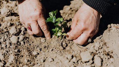 Biljne zadruge u teoriji i praksi: Susjedstvo Jelenje EPK organizira zanimljivu vrtlarsku radionicu