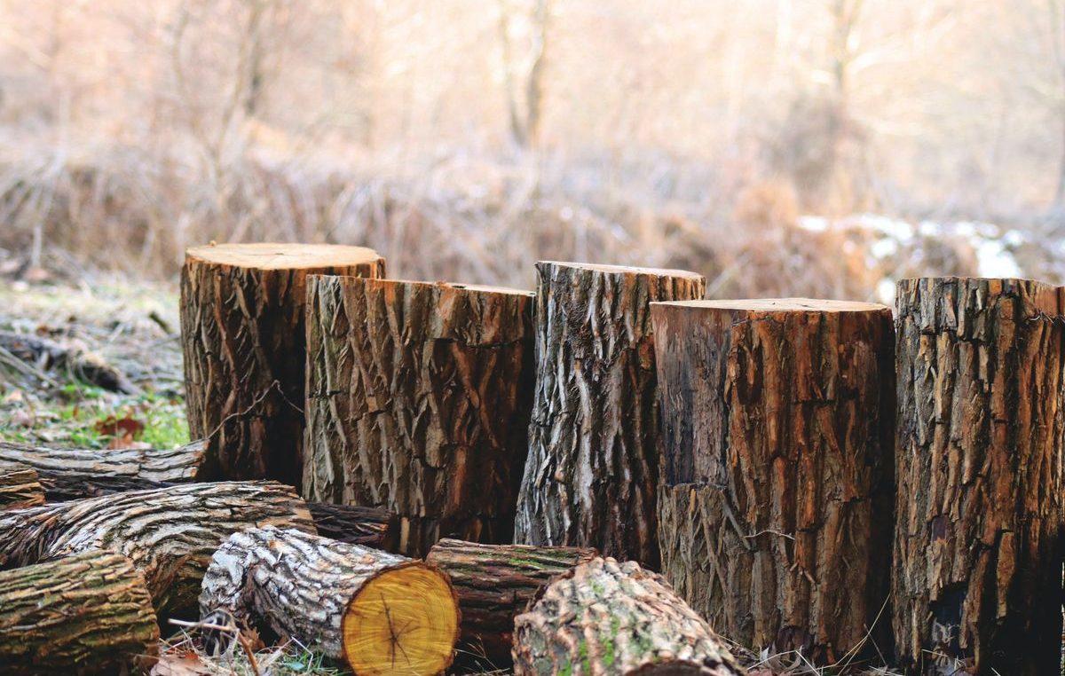 Posjekao i otuđio 65 kubnih metara drva; oštetio 66-godišnjakinju za oko 34.000 kuna