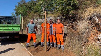 Novih deset stabala zasađeno na cesti od čvora Hosti prema Viškovu